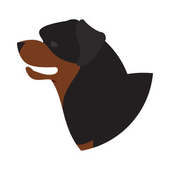 Dog head rottweiler