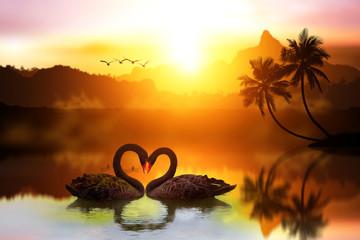 mooie zwarte zwaan in hartvorm op meerzonsondergang. Liefdevogelconcept