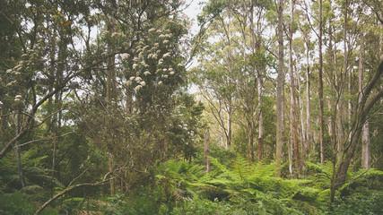Gemäßigter Regenwald an der Great Ocean Road in Victoria, Australien