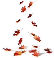 Pile of autumn colored leaves  on white background.
