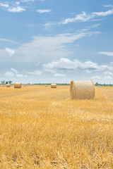 Bale of hay on a yellow harvesting field