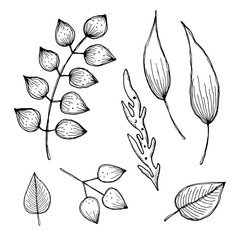 Set of vector illustrations of different leaves,  isolated on the white background. Hand drawn contour lines and strokes. Graphic vector illustration