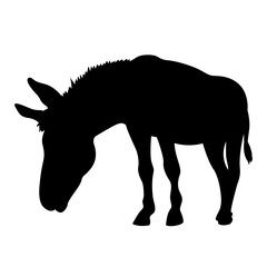 Donkey vector illustration  black silhouette