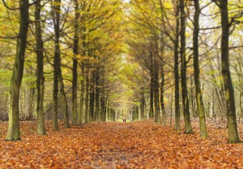 Avenue Of Trees In Autumn; Amsterdam, The Netherlands