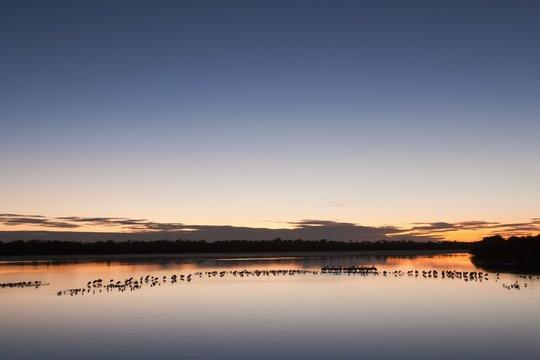 Wading Birds In Water At Twilight At J. N. Ding Darling National Wildlife Refuge; Sanibel Island, Florida, Usa