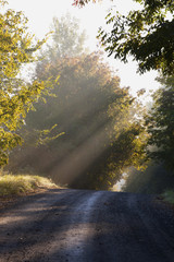 Early Morning Light And Mist On A Country Road; Ville De Lac Brome, Quebec, Canada