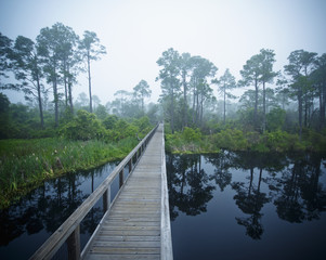 A Wooden Boardwalk Over A River With Trees Reflected In The Water; Pensacola, Florida, United States of America