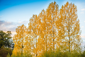 Beautiful autumn trees. Autumn landscape