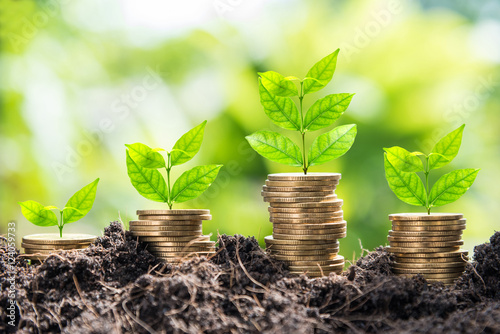 growth of golden coins in soil with green leaf background