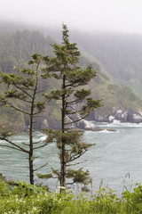 Two Trees On The Edge Over The Ocean With A Rocky Coastline In The Background; Heceta Head, Oregon, United States of America