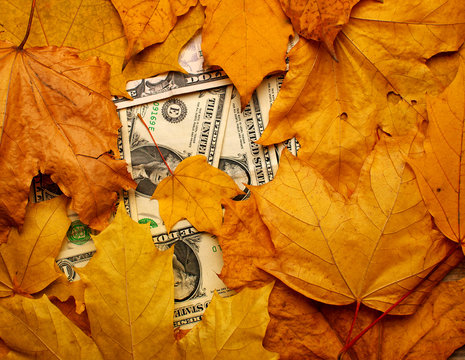 dollar banknotes under fallen leaves, closeup, top view