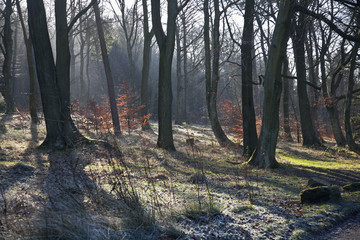 Leafless trees in autumn in longshaw estate peak district national park;Derbyshire england