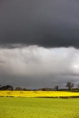 Dark Storm Clouds Over Farmland; Yorkshire, England
