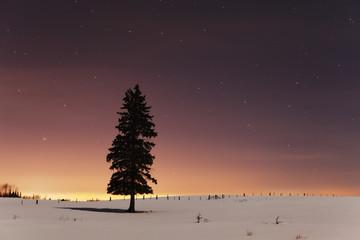 Stars In The Night Sky With Lone Tree; Thunder Bay, Ontario, Canada