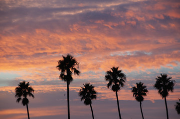 Silhouette Of Palm Trees And Pink Clouds At Sunset; Santa Monica, California, United States Of America