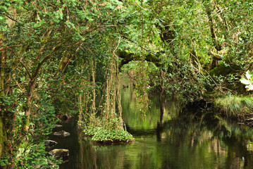 Lush Green Foliage Reflected In The Water; Ireland