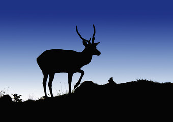 Silhouette Of A Deer Standing On A Hilltop At Dusk; North Yorkshire, England