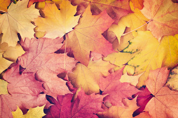 Autumn fall background in vintage style autumn concept