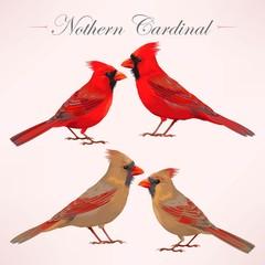 Set of nothern cardinals