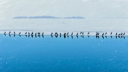 A flolck of birds on the ice.