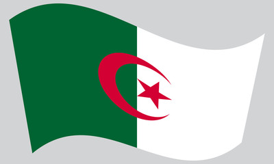Flag of Algeria waving on gray background