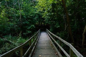 Wooden Bridge Leading into the Wood