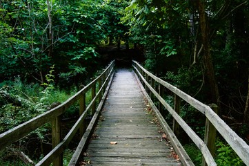 Wooden Bridge Leading into the Wood