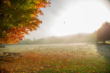 Orange Autumn Tree and Bench in the Middle of a Foggy Field in the Morning of Fall
