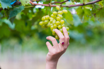 grapes with woman hand