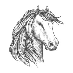 Arabian mare horse head isolated sketch