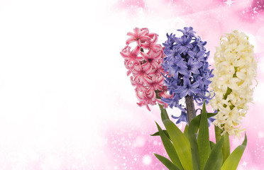 Beautiful flower background.Nature floral poster