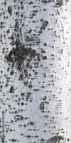 Wall mural birch bark