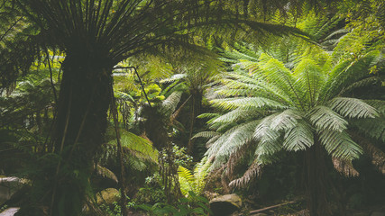 Poster Jungle Gemäßigter Regenwald bei den Erskine Falls, Great Ocean Road in Australien