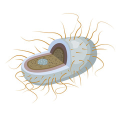 Vector illustration of bacteria in the section. Microorganism is