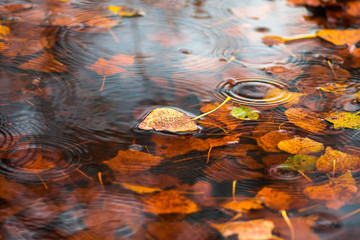 Yellow dry leaf on water