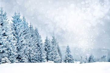 Christmas greetings background with snowflakes and fir trees