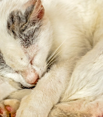 Closeup face of white cat is sleeping