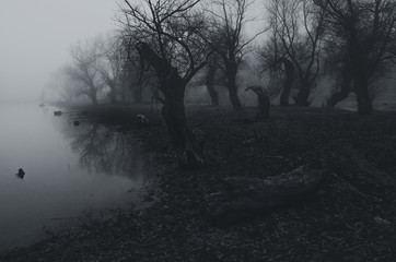 Creepy dark forest beside river shore on misty autumn day