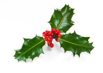 A sprig of Christmas holly and red berries isolated on a white background