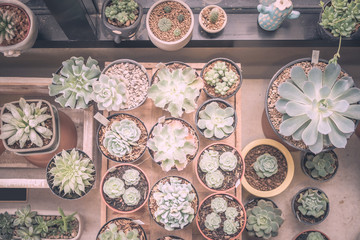 Vintage style of actus in pot. Domestic cactus closeup. Cactuses of various grades in the Flower market. The flower market is one of sights of the city