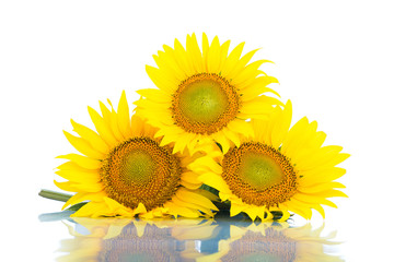 Three sunflowers. Isolated on white background