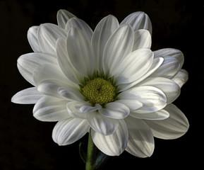 Flower VII