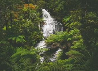 Fotorolgordijn Jungle Triplet Falls im Great Otway National Park in Victoria, Australien