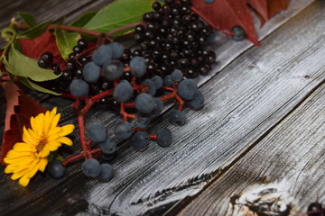 Autumn harvest of fruits and grapes and colored leaves and fall colors on the old gray vintage wooden background