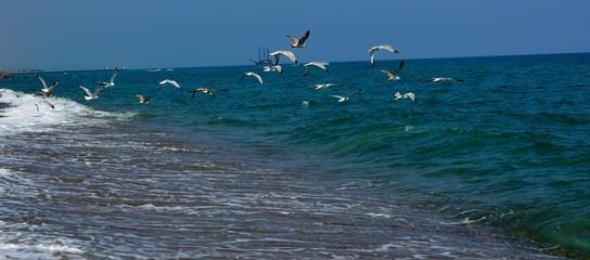 Uçun kuşlar uçun