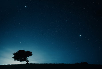 Night sky landscape with starry sky and lonely tree on top of a hill