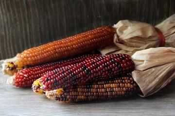 Ornamental corn still life