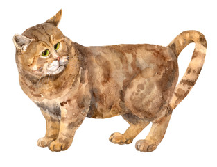 Brown thick cat with green eyes, shorthaired, tabby, standing, on white background, hand draw watercolor painting, animal illustration, vintage