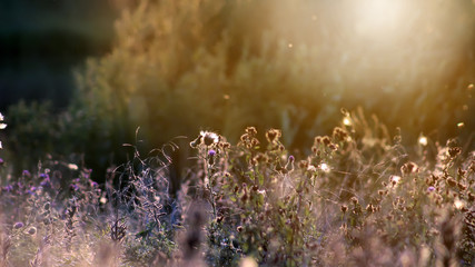 Summer background, landscape at sunset, grass in backlight, blurred image with the effect of motion, shallow depth field