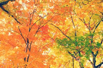 紅葉 / 明るいイメージ